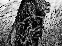 Afrika: Die gewaltige Ruhe der Wildnis |ZEIT ONLINE