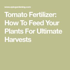 Tomato Fertilizer: How To Feed Your Plants For Ultimate Harvests