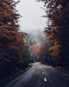 The road that feels like being in an Autumn movie one of those places that didn't seem real a journey surrounded by so much gold mist and mystery. Have a great Thursday all!
