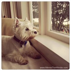 I can even keep an eye on the pesky seagulls on the beach from the cottage we stayed at!