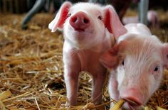 they can be on my farm too!