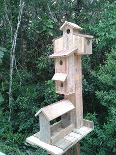 Casa passarinho com tratador
