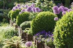 haie vive haie de jardin naturelle cloture jardin idée