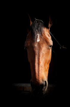 500px / Лошадь by Vladimir Fedotov