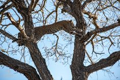Tailormake your Safaris and Tours to Africa with the Pioneers who created this concept and Live in Africa. Lazy Morning, The Game Is Over, Night Driving, Beautiful Morning, Africa Travel, Hush Hush, Beautiful Birds, Giraffe, Safari