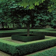 Boxwood| http://best-colorful-rose-followers.blogspot.com