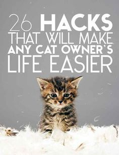 26 Hacks That Will Make Any Cat Owner's Life Easier. Every one of these is brilliant.