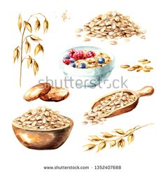 Oat ears and oat products. Watercolor hand drawn illustration isolated on white background Stock fénykép 1352407688 Shutterstock Strate Design, Recipe Book Design, Rainbow Food, Photo Images, Grain Foods, Cereal Recipes, Muesli, Food Illustrations, Illustrator