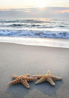 beautiful |ocean | inspire | sea | star fish | summer | sand | waves