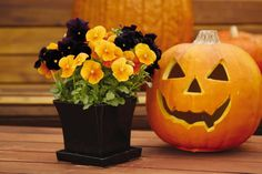 Image result for halloween container garden