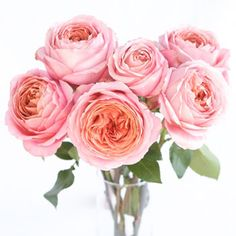 FiftyFlowers.com - Cabbage Garden Rose Romantic Antique Pink  Scented 36 for 149.99 or 72 for 179.99