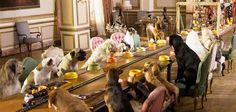 Entra en vigor una ley en Nueva York que deja en manos de los dueños la decisión de permitir la entrada de los perros a sus restaurantes y así satisfacer las peticiones que los ciudadanos venían haciendo desde hace años.