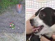 A család kutyáját egy autó ütötte el. Eltemették, 14 óra múlva az ajtóban állt a kis kedvenc… Terrier, Dogs, Dog Died, Automobile, Exercises, Pet Dogs, Doggies, Terriers