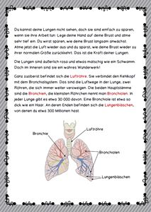 Das menschliche Skelett…… (Abenteuer Inklusion) | Deutsch lernen ...