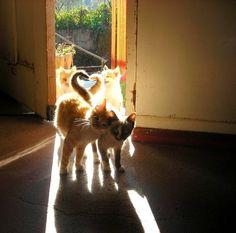 cat love animals cute Black and White kitten animal bw pet pets black and white animals I Love Cats, Cute Cats, Funny Cats, Crazy Cat Lady, Crazy Cats, Cute Baby Animals, Funny Animals, Animal Gato, Here Kitty Kitty
