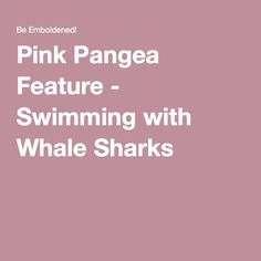 Embolden Adventures has been featured on the Pink Pangea travel site! Come explore what it is like to swim with whale sharks in the ocean! Shark In The Ocean, Swimming With Whale Sharks, Gulf Of Mexico, Caribbean Sea, Pink, Pink Hair, Roses