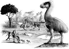 Taubate Basin by rfcunha on DeviantArt Prehistoric Wildlife, Prehistoric World, Prehistoric Creatures, Extinct Animals, Extinct Birds, Feathered Dinosaurs, Vida Animal, Evolutionary Biology, Weird Creatures