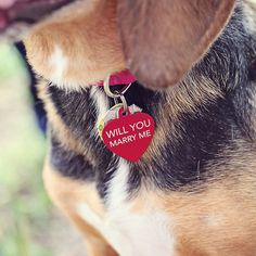 Groom Proposed with a Puppy