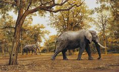 South African Wildlife Artist | Johan Hoekstra Wildlife Art Collection ...