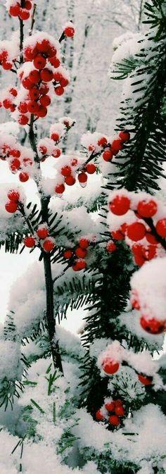 Christmas-card worthy image!