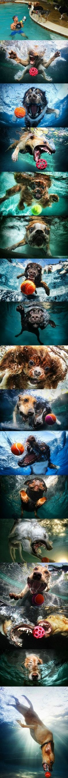Dog pics with an underwater camera