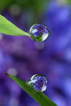 purple and green by greca
