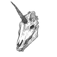Unicorn Skull by Rante Koehn, via Flickr