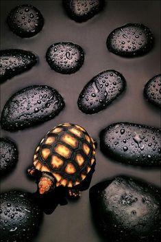 Stones and Turtle