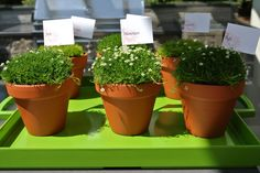 Flowering moss favors Mothers, Planter Pots, Favors, Lunch, Flowers, Wedding, Valentines Day Weddings, Presents, Guest Gifts