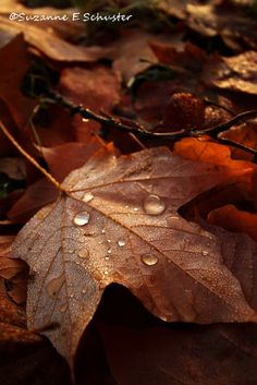 Fall leaves covered in dew....