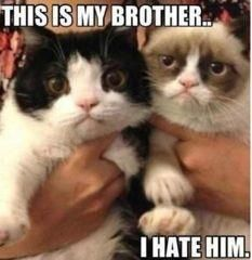 There is another slightly less grumpy cat!