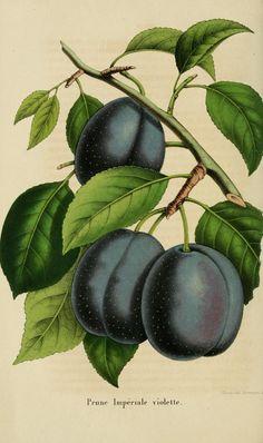 t.6 (1856) - Belgique horticole. - Biodiversity Heritage Library