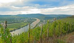 "end of "" Indian Sommer"" Magic Mosel Valley - only 10 walking minutes form the Hotel"