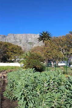 66 Square Feet: Oranjezicht City Farm