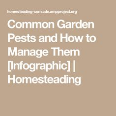 Common Garden Pests and How to Manage Them [Infographic] | Homesteading