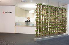 Reception indoor plants displays from Ambius