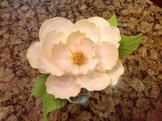 Sugar magnolia.