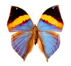 фото бабочки: 20 тыс изображений найдено в Яндекс.Картинках