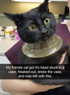 Got stuck in a vase