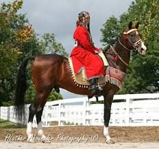 The Akhal-Teke horses were highly prized and loved by their owners, their tack was often made with gold and silver as well as many precious stones.