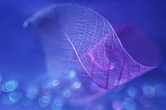 Photos by Shihya Kowatari Beautiful macro photos of leaves using lighting and lens effects. You can see more at Image Symbols, Leaf Art, Life Is Beautiful, Cute Art, Photo Art, Art Photography, Nature, Pictures, Photos