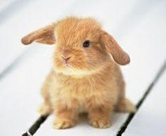 Quieren saber como cuidar a un conejito recién nacido?? Aquí les damos los mejores tips :) www.animalcard.com.mx