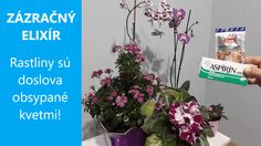 Orchidey, fialky a ďalšie izbové kvety sú najkrajšie vtedy, keď rozkvitnú v cele svojej kráse. Ak nám tieto krásavice nechcú kvitnúť, sme z toho právom smutní. Avšak tento roztok je pre kvety ako zázračný elixír … Jar, Plants, Plant, Jars, Glass, Planets