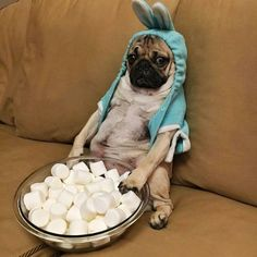 Rose McGowan's pug is not vibing this whole situation.  #refinery29 http://www.refinery29.com/2016/03/106931/celebrities-easter-holiday-2016#slide-2