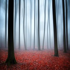 Red Autumn #2 by Carsten Meyerdierks on 500px