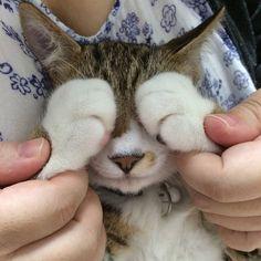 見えニャーっ(´ฅㅅฅ`)💦 by.海(まりん) 抱っこしていたら、いつの間にか寝落ちた海たんの、カワユイ手袋を使って遊びますた( ¯ω¯ )✨←悪魔 それでも起きない海たそwww #キジ白 #5ヶ月 #猫 #ねこ #neko #にゃんこ #にゃんだふるらいふ #子猫 #kittycat #可愛い #pretty #愛猫 #mycat #ふわもこ部 #ペコねこ部 #親バカ部 #cat #catstagram #catsofinstagram