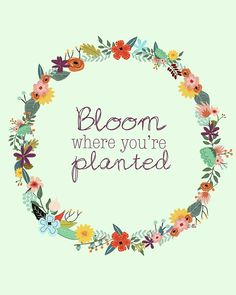 Bloom where you're planted.  #grow #inspire #change