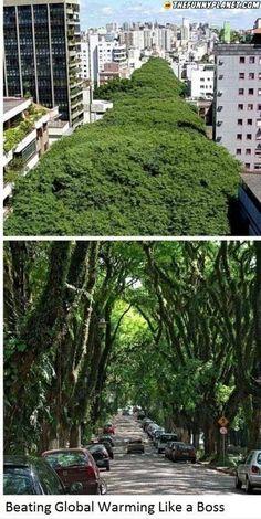 Beautiful path in Brazil.