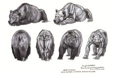 Drawing Animal Character Designs from Brother Bear by Terryl Whitlatch - Animal Sketches, Animal Drawings, Art Drawings, Drawing Art, Brother Bear, Animal Sculptures, Lion Sculpture, Ours Grizzly, Terryl Whitlatch