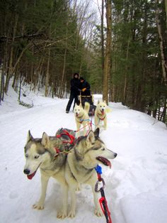 Dog sledding with Vermontology Guided Tours